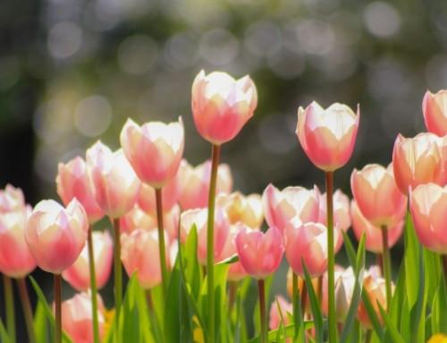 ゆらぎの春の過ごし方